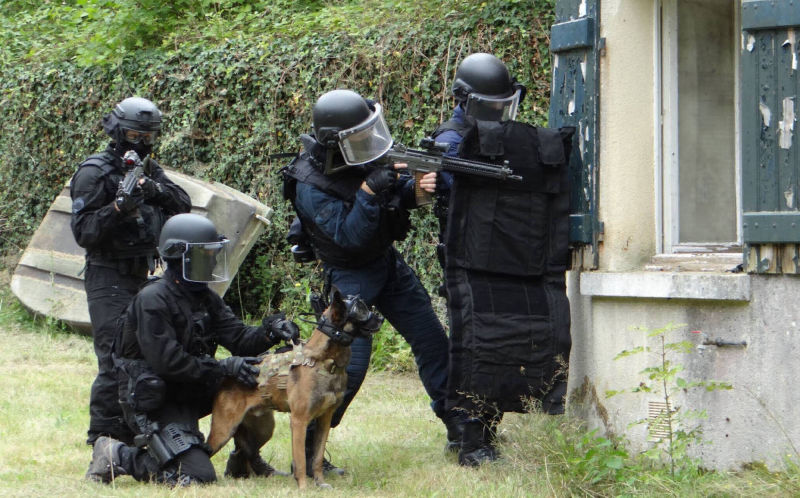 k9 vision system pour chiens, brigade cyno et canine