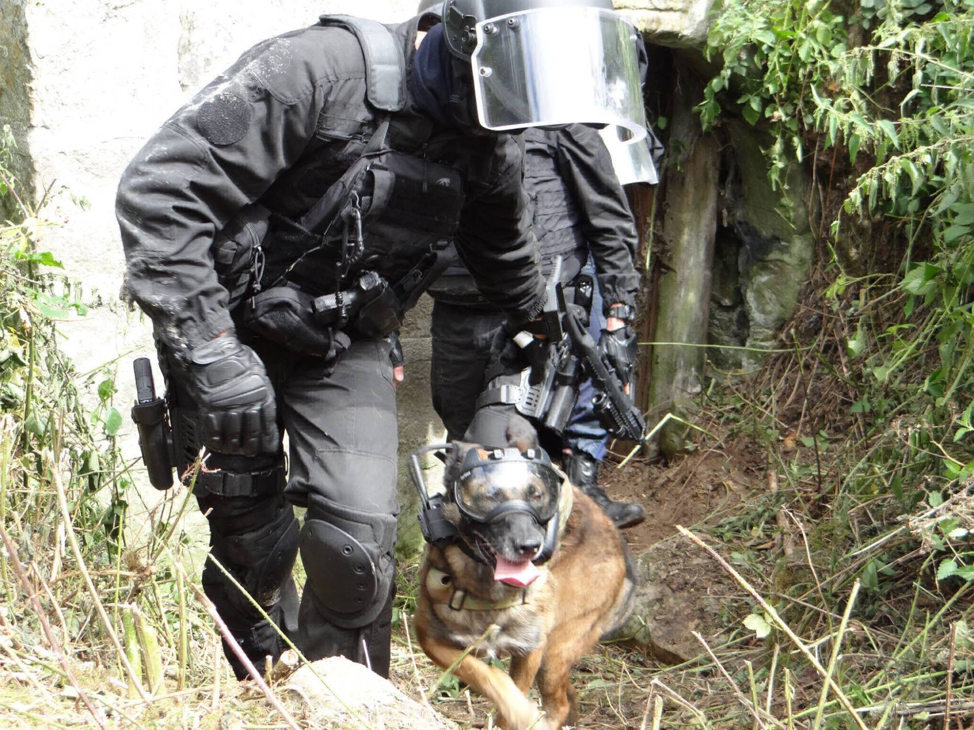 k9 vision system - equipement cyno pour brigade canine