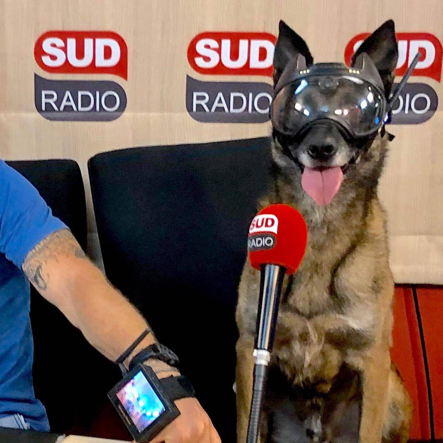 sud radio chien k9 vision system pour brigade cyno et militaire